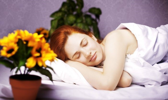 12 Plants For Your Bedroom To Sleep Better And Treat Insomnia Uncensoredchina